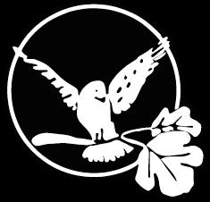 whitebirdnotitle